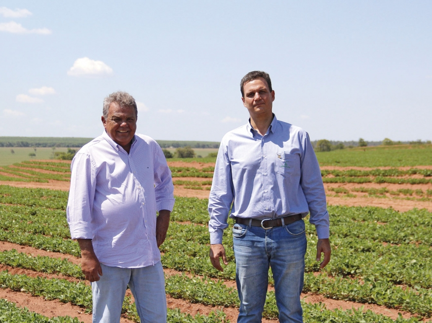 O produtor da região de Tupã, Flávio Pavão, que em sua estratégia integra o amendoim com a pecuária ou mandioca