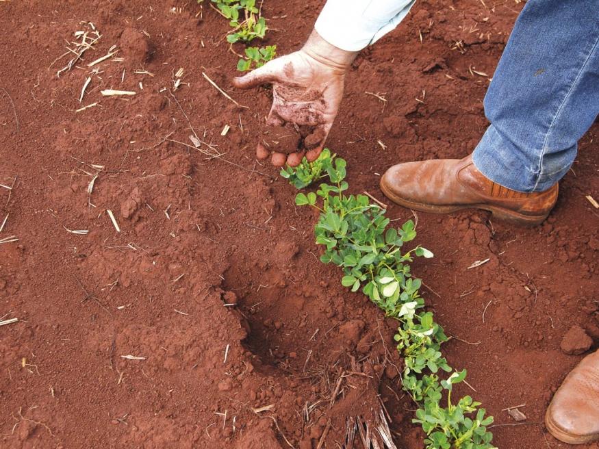 Produtor mostra a profundidade que se encontrava alguma umidade no solo. Foto feita antes das chuvas da metade de novembro