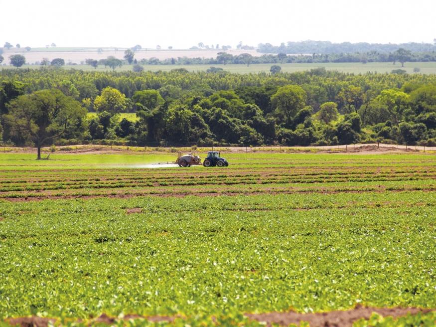 No final de outubro, Souza já estava fazendo a primeira aplicação de fungicida nas áreas onde o plantio foi realizado em setembro