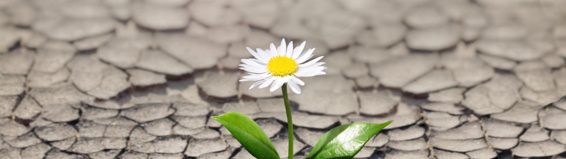O assunto do dia 22 de abril de 2020: Preço do diesel, uma flor em meio ao lamaçal