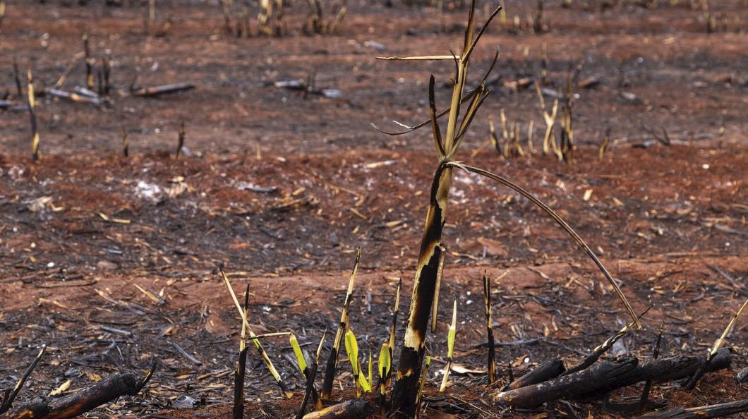 Incêndios em áreas canavieiras