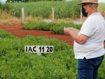 Copercana desenvolve campo de ensaio de novas cultivares de amendoim