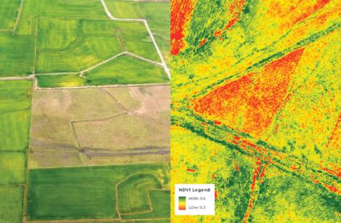 O que são mapas NDVI e como utilizá-los na fazenda