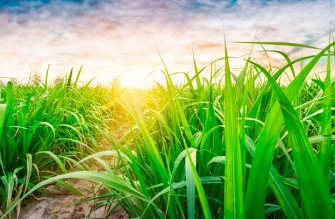 Prêmio Usinas Campeãs de Produtividade Agrícola Safra 2020/2021