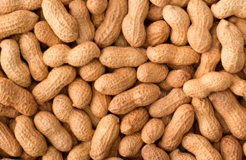 Zoneamento agrícola do amendoim já está disponível para todos os estados