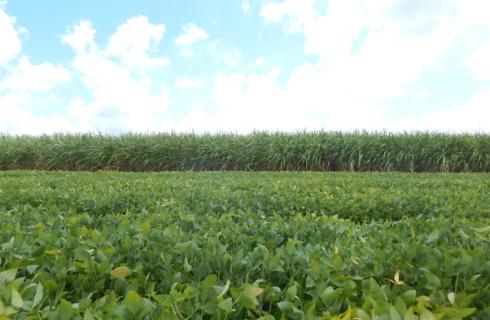 Rotação de cultura soja – cana-de-açúcar