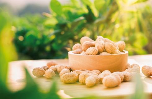 Desafios e oportunidades para a cultura do amendoim nos próximos anos